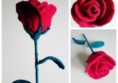 Rose Hdc